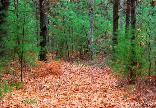 5. Walk in woods-kab