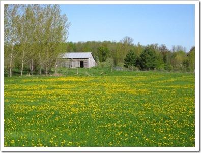 20120514_spring-property_004