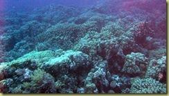 RD Hard Coral Garden