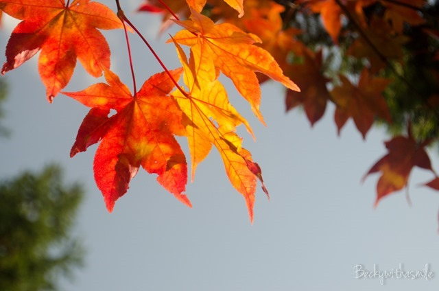 2013-10-12 Furano Fall Colors 011
