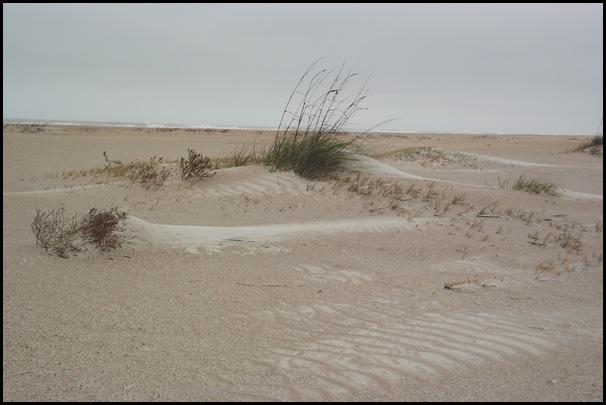 Ancient Dunes  Trail 016
