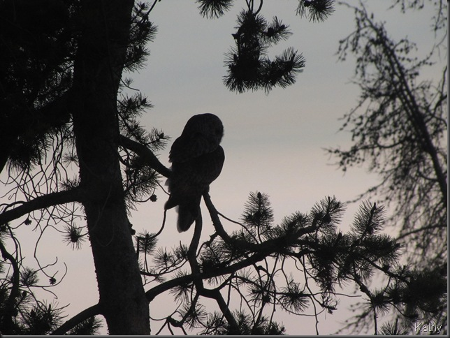 Evening Silouette