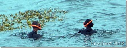 La Jolla Snorklers