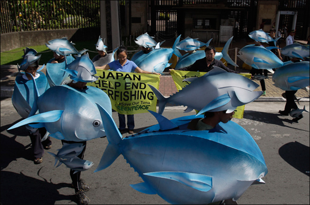 Environmental activists hold slogans as others depict a school of tuna during a rally outside the Japanese Embassy in suburban Pasay, south of Manila, Philippines, on 29 November 2012. Aaron Favila / AP Photo