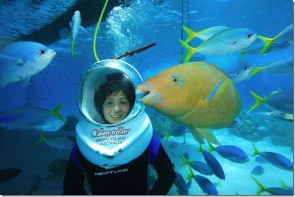 seawalker-photogenic-fish-2