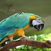 zoo_kolmarden_8989.jpg