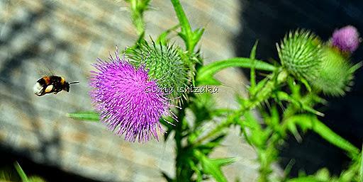 1 - Glória Ishizaka - 1 flor 3 gde