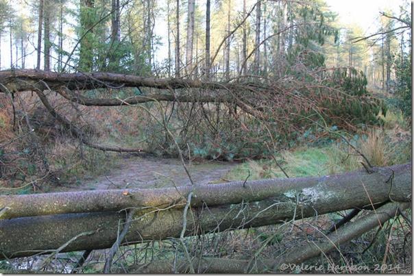 12 fallen-trees