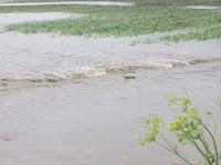Flooded field near Fir Avenue southwest of Wellman