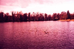 Twig-in-the-Lake---XPRO