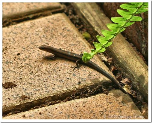 Lizard_TerraCotta_IMG_6540 (2)