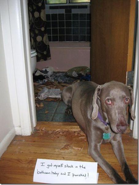 dog-shaming-bad-19