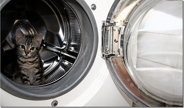 gatos lavadora (2)