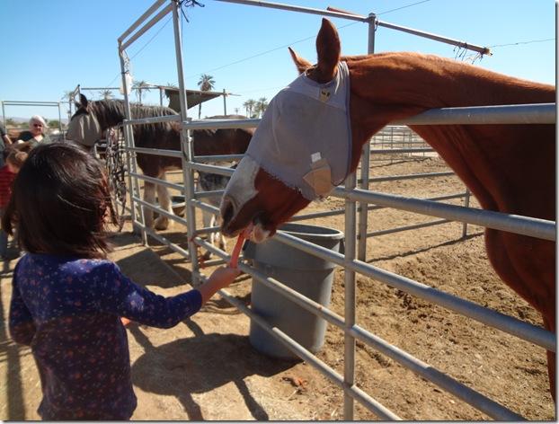 Epona Horse 064