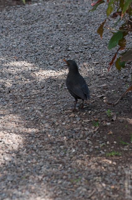 82. Какой-то птичий пешеход, не улетала, всё время перелетала от меня.