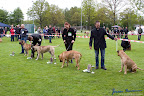 20100513-Bullmastiff-Clubmatch_31121.jpg