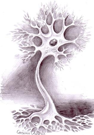 Arborele neuronal Neuron desent in creion - Neuron pencil drawing