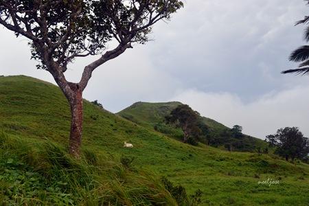 Mt. Pinagbanderahan/Gulugod Baboy