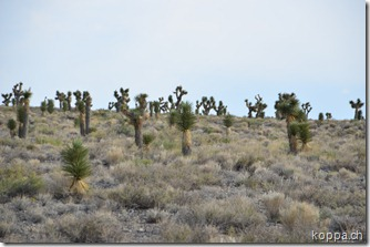 110910 Death Valley (63)