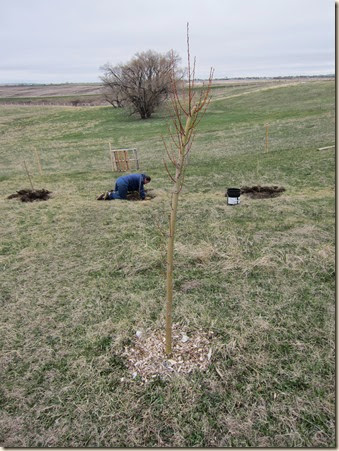 tree planting 721