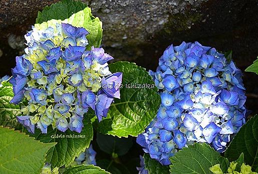 Azul - Glória Ishizaka 41