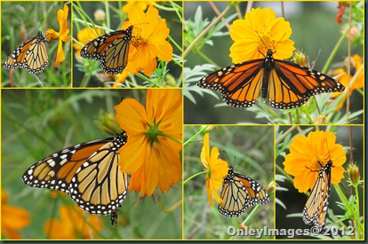 0924 monarch collage