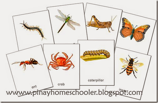 arthropods preview