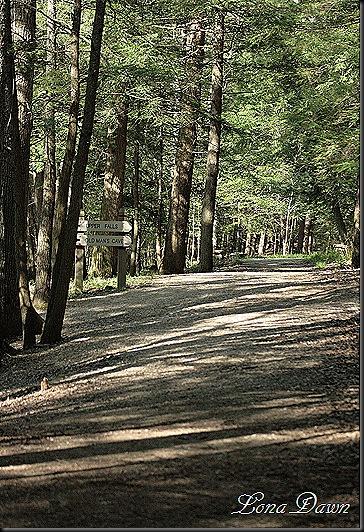 OMC_Trail
