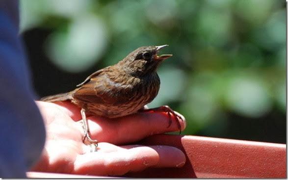 sparrow-face-japan-16