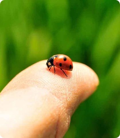 una preciosa mini catarina en mi dedo