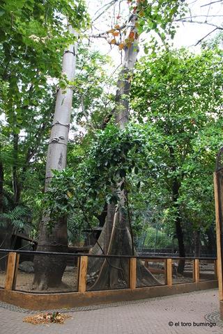 manila zoo 8