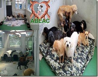 abeac_resgatados_300_b