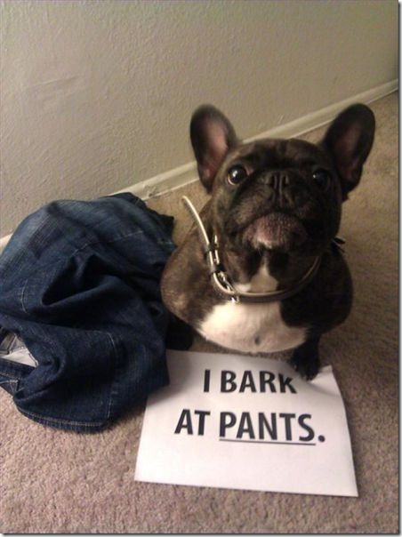 dog-shaming-bad-1