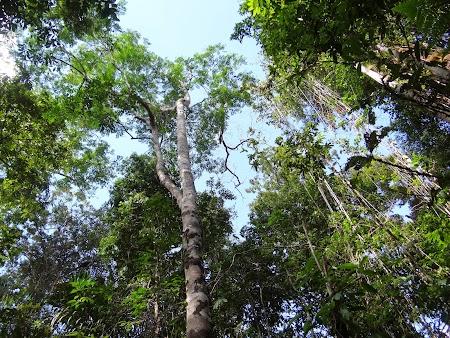 08. Copaci din jungla.JPG