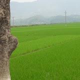 La plaine de Dien Bien Phu