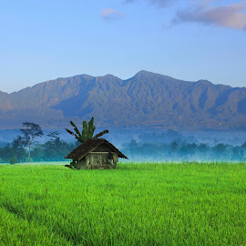 The hut by Wisnu Widayat - Landscapes Prairies, Meadows & Fields
