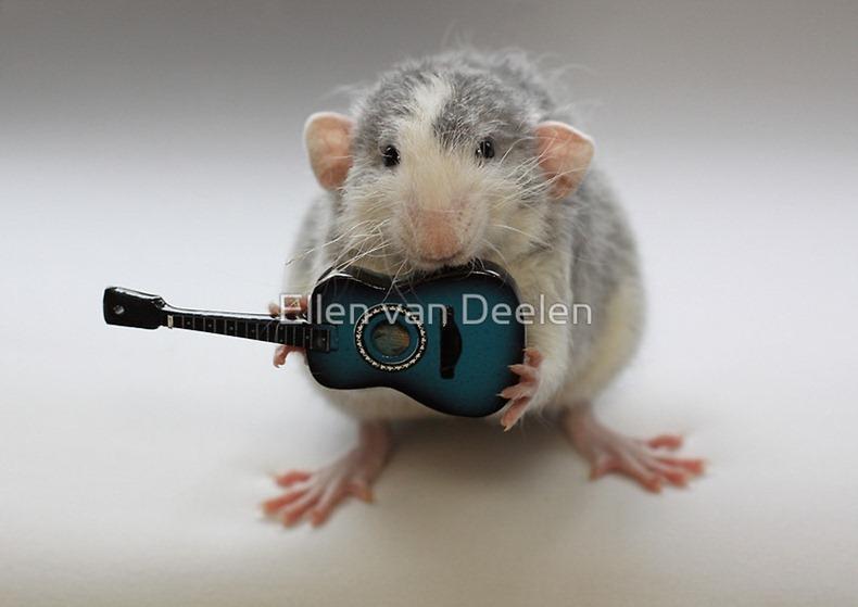 rat-musicians-007