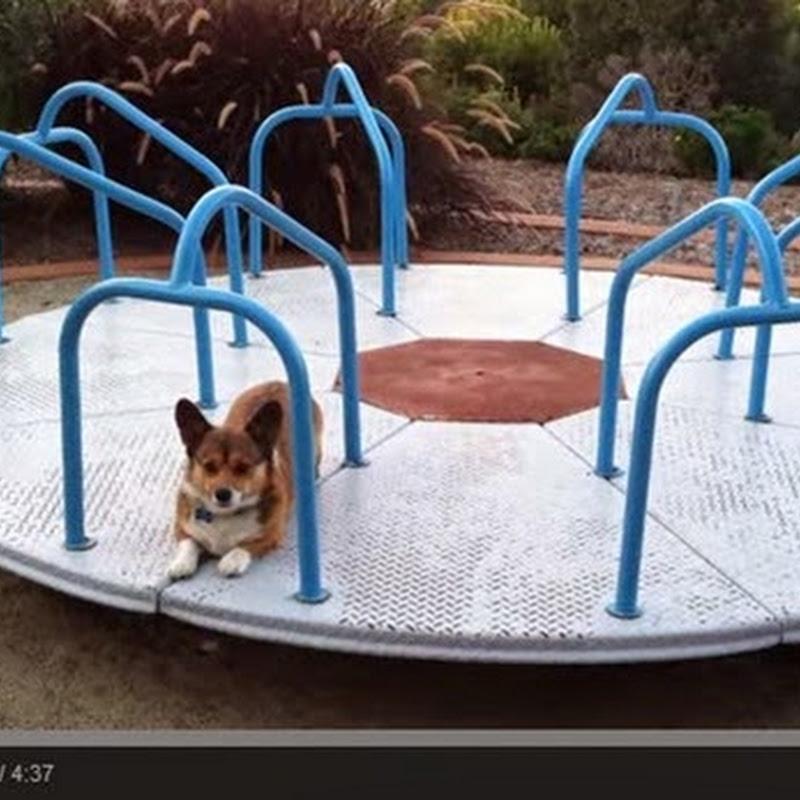 Ένας σκύλος στη παιδική χαρά