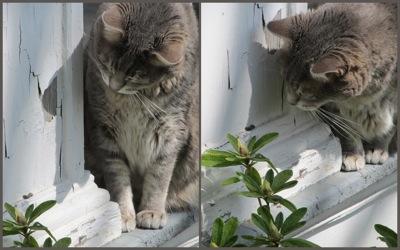 Cat inchworm2