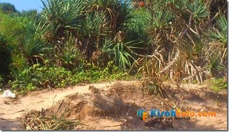 Tebing pantai watu kodok Drini_01