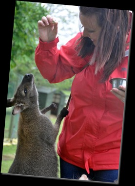 Christina feeding Wallaby (resized) DSC_1085