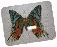 бабочки 126