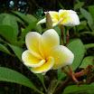 seychelles4_20070412_2094406761.jpg