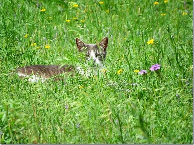 Kitty_Wildflowers