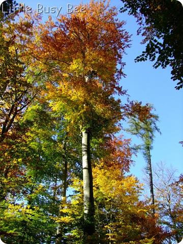 2012_1021photosblog0025