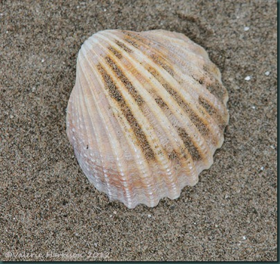 37-shell