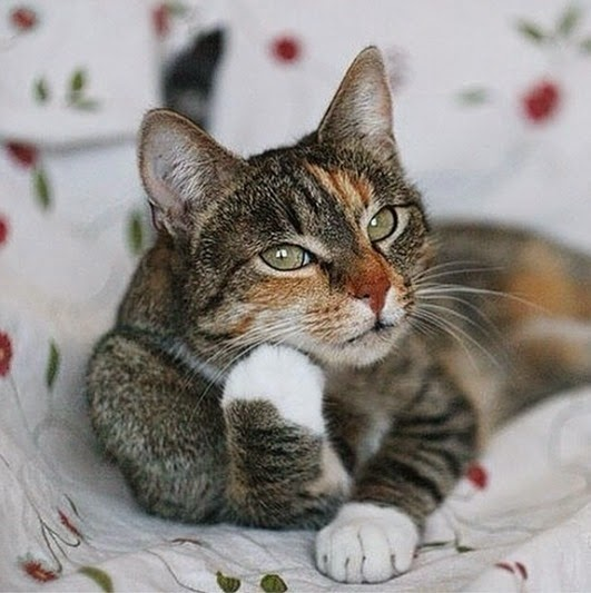 cat_thinking