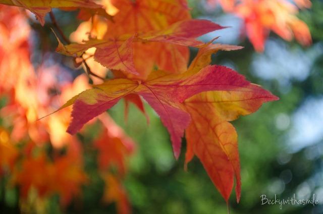 2013-10-12 Furano Fall Colors 010