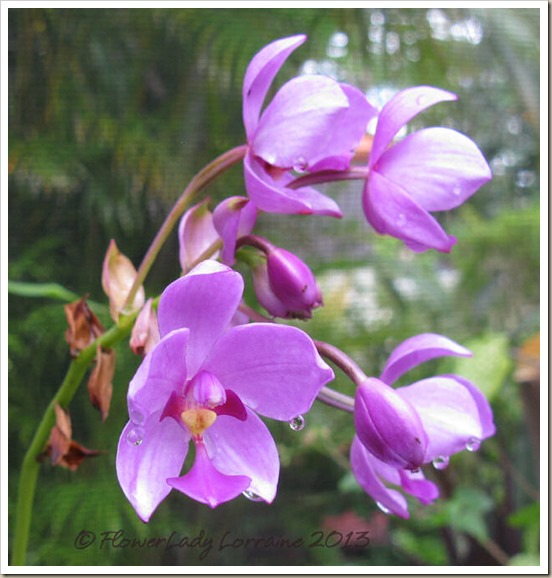 06-27-grnd-orchid