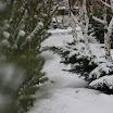 снежная зима 08-09 года (18).jpg